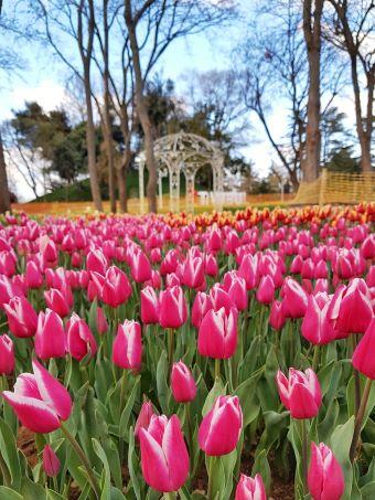 festival de las tulipas en Estambul